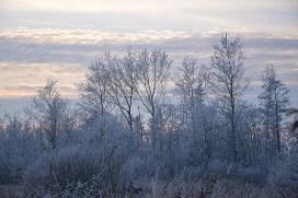 Knacken des Frostes