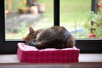 Katzenzeit