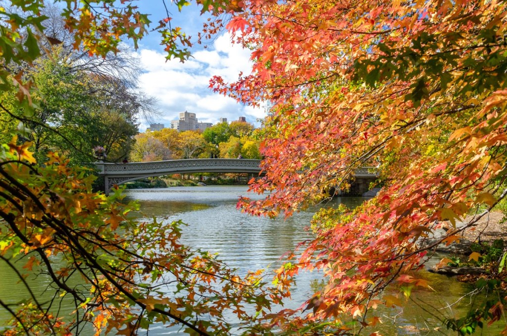 The Rambles offer a unique perspective of the Bow Bridge in Central Park