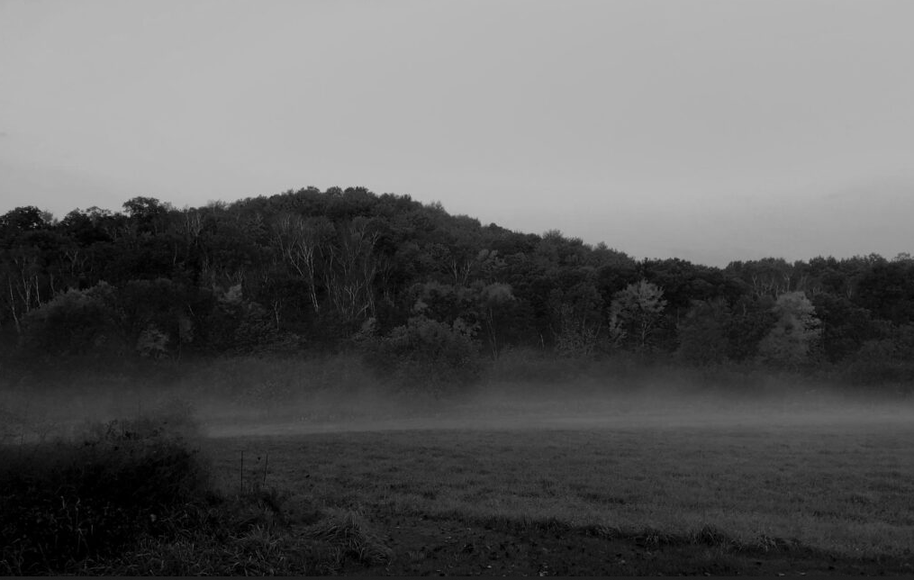 Spooky tales of Sasquatch sightings