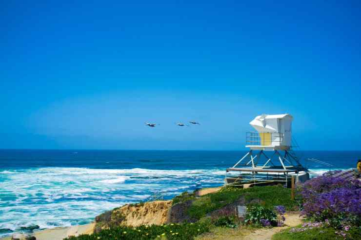 a white lifeguard tower pearched on a golden southern california cliffside, covered in yellow and purple flowers overlooking blacks beach, the best surf spot in La Jolla near San Diego
