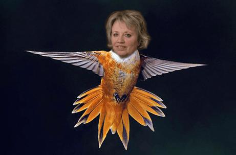 ummingbird