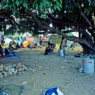 pot party, Flamingo Park, 1972. Recognize that tree in todays tot lot.