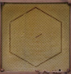 Rangleklods - Beekeeper (2012)