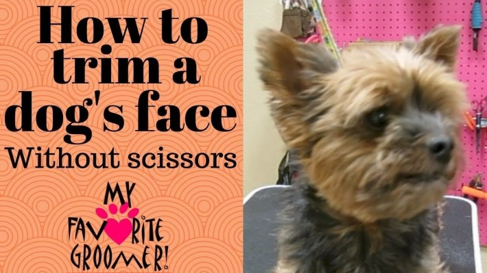 How To Trim A Dog's Face Without Scissors - Youtube with regard to How To Trim A Carin Terriers Face
