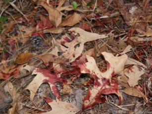 blood-trail-2