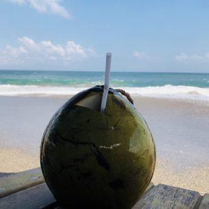 バリ島椰子の実
