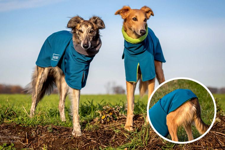Windhunde im Hundemantel