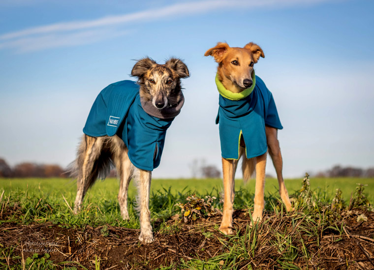 Leichte Funktionsbekleidung für Hunde