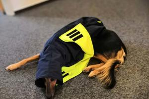 Individuell gefertigter Hundemantel nach Kundenwunsch