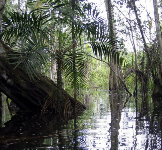 amazonie-1-des-arbres-stockent-50-du-carbone-photos-dr-1442519629