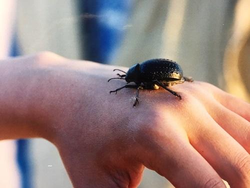 サハラ砂漠にいた虫