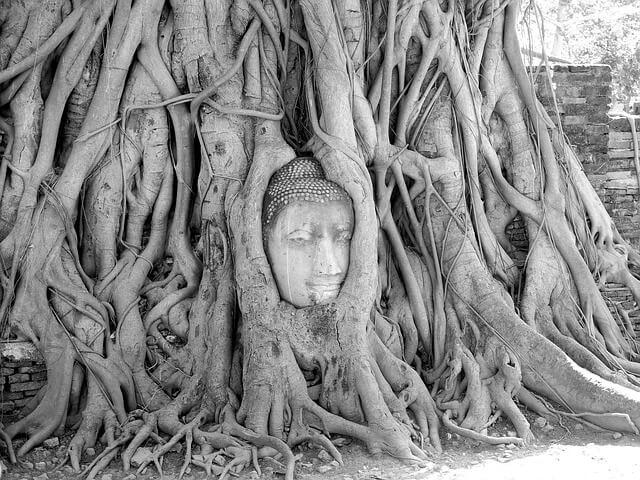 タイのアユタヤ遺跡の仏像の頭