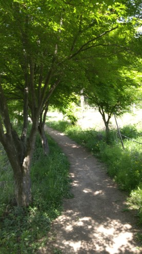 The walking path, pretty, but buggy