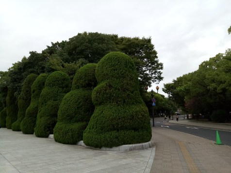 Hedges shaped liked 達磨, daruma dolls which are used to make wishes