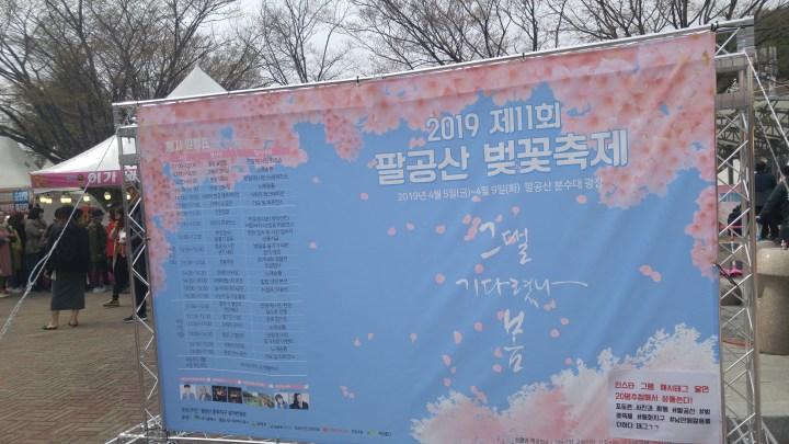 팔공산 벚꽃축제 Palgongsan cherry blossom festival