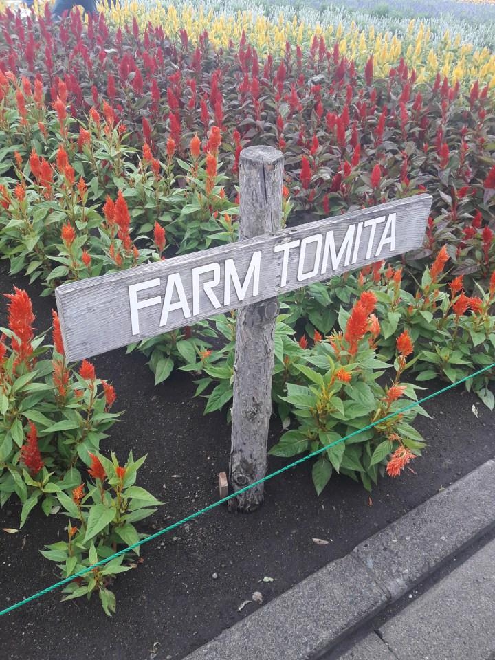 Farm Tomita ファーム富田