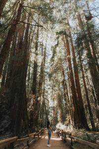 Viewer in on a path in Muir Woods. A woman stands in the middle of the path looking up at the tall thin redwood trees. On either side of the path are wooden fences
