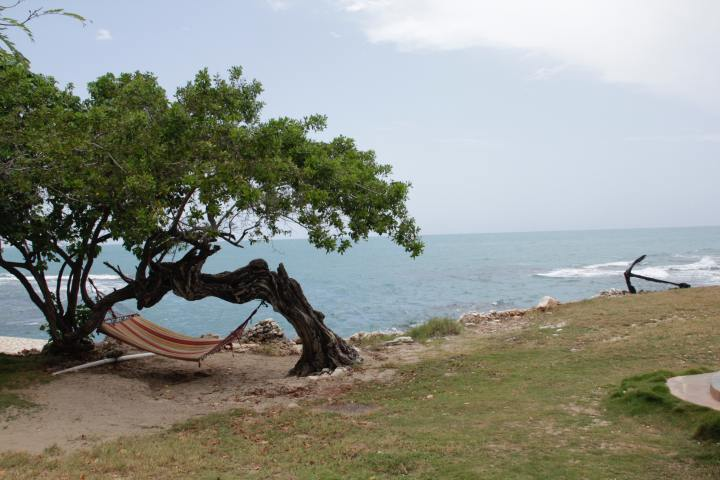 Two tree trunks bending towards one another with lush green leaves above and a hamock strewn between them in the upper left foreground. In the background, behind the trees is the ocean and an anchor resting on the coast in Jamaica.