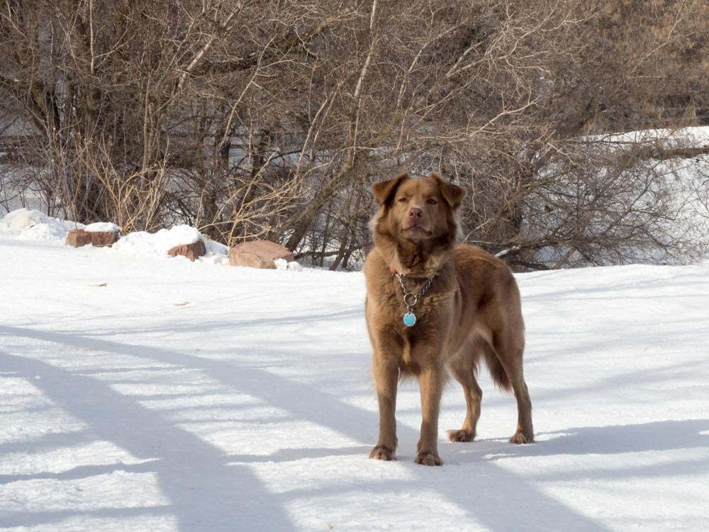 Cocoa Dog on a Hike
