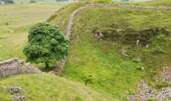 Sycamore Gap Hadrian's Wall Path
