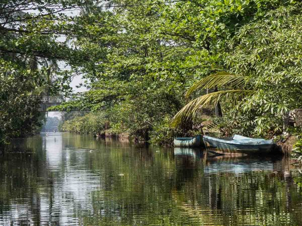 Muthurajawela Reserve Negombo Lagoon Sri Lanka
