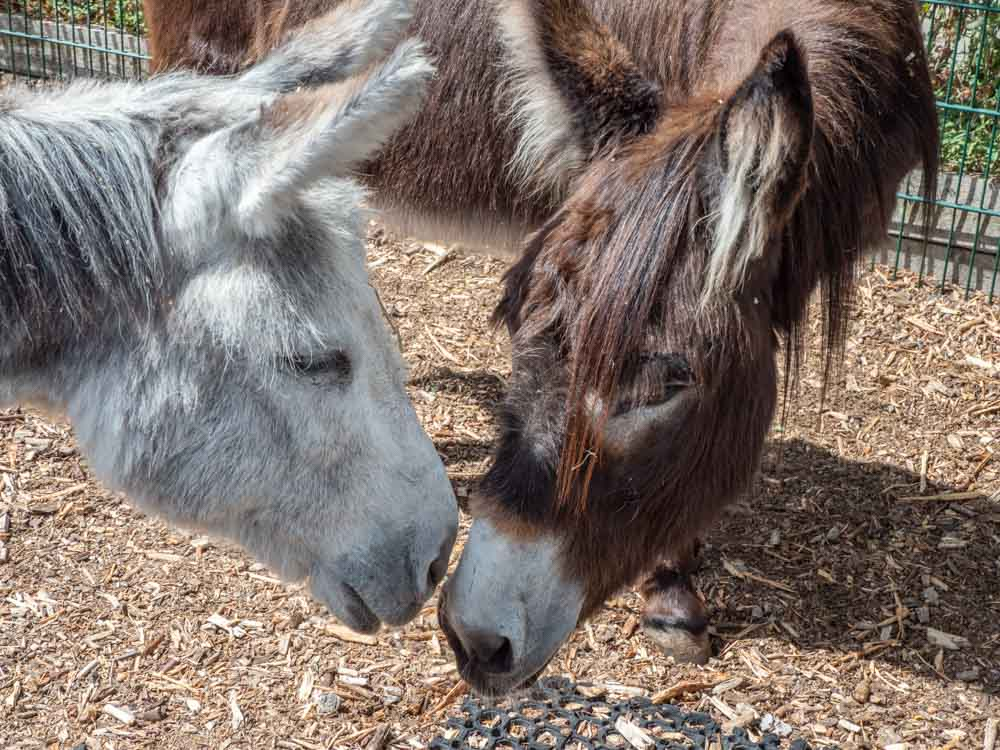 Shoreditch parks: Spitalfields City Farm donkeys