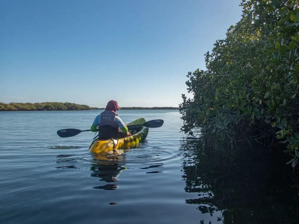 Magdalena Bay, Baja Mexico kayaking in mangroves