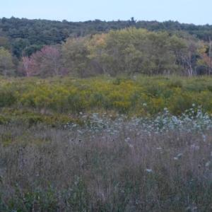 Habitat Walk at Greenways: Birds, Bees & More @ Greenways Conservation Area, Wayland
