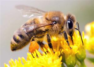 All About Bees @ Wayland Library | Wayland | Massachusetts | United States