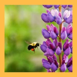 CANCELLED: Learn about Pollinators & Make a Mason Bee Hotel @ Wayland Library | Wayland | Massachusetts | United States