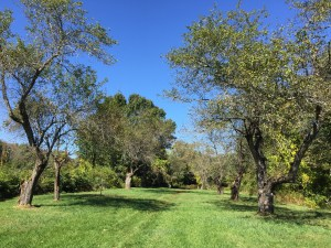 Heard Farm Heirloom Apple Orchard Dedication @ Heard Farm