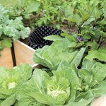 WORK IN CONCERT WITH NATURE TO MANAGE GARDEN PESTS