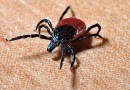 HAVE YOU FOUND A TICK THIS YEAR?