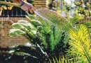 SUMMER GARDENING TIPS FOR WHEN THE WEATHER HEATS UP – Green-Thumb Gardener