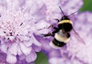 SUPPORT NATIVE BEES & ENJOY THE MANY BENEFITS
