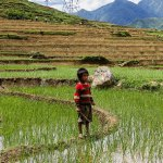 No Welcome Mat for Monsanto: Vietnam Must Draw the Line