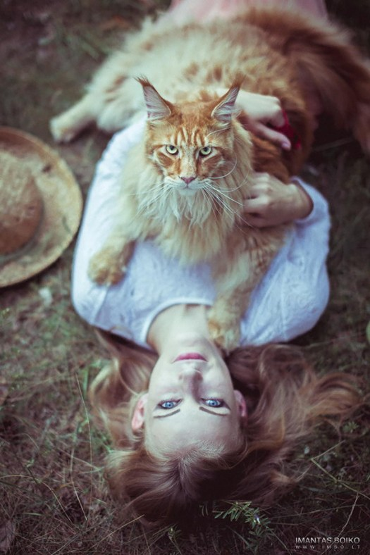 maine-coon-cats 4