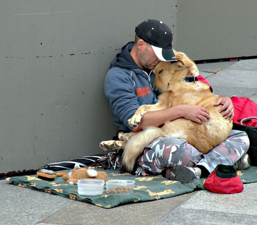 homeless-dogs-2