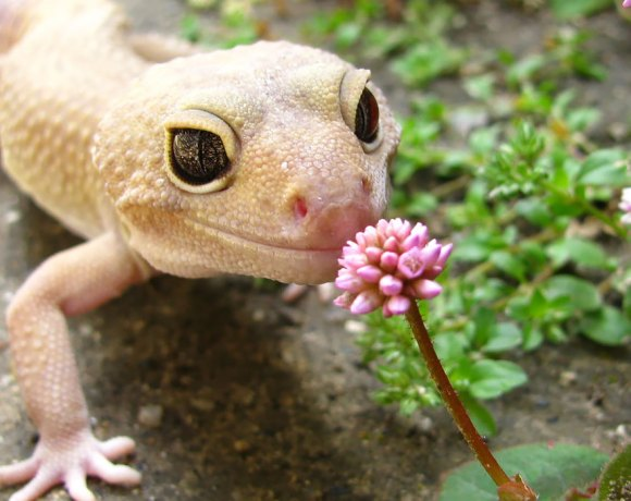 animals-smelling-flowers-20