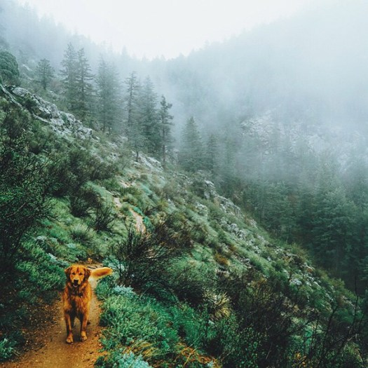 traveling-dog-aspen-the-mountain-pup-instagram-25 1_1453188316