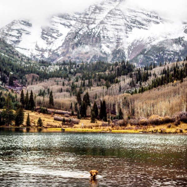 traveling-dog-aspen-the-mountain-pup-instagram-56_1453188316