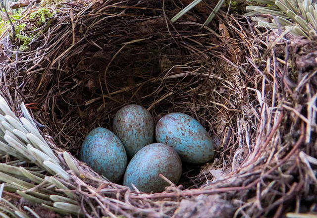 nest low res
