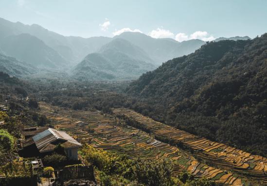 paddy fields khonoma nagaland