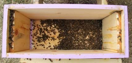 2 - box of bees