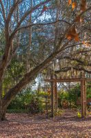 A tree drips with Spanish moss over a wooden pergola and trail to a bench.