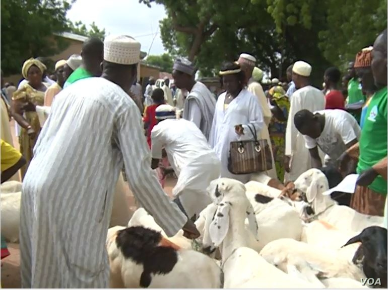 Beneficiaries of the initiative take possession of their livestock in Maroua, Cameroon, July 11, 2019. (M. Kindzeka/VOA)
