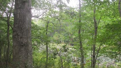 freshbrook from trail