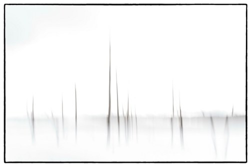 03_John Cross_Lodgepole pine abstract