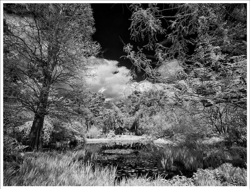 john cross water lilly ponds